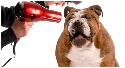 DON'T JUST PICK ANY DOG GROOMER: TIPS AND TRICKS