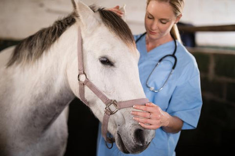 Respiratory problems in horses: Part 2