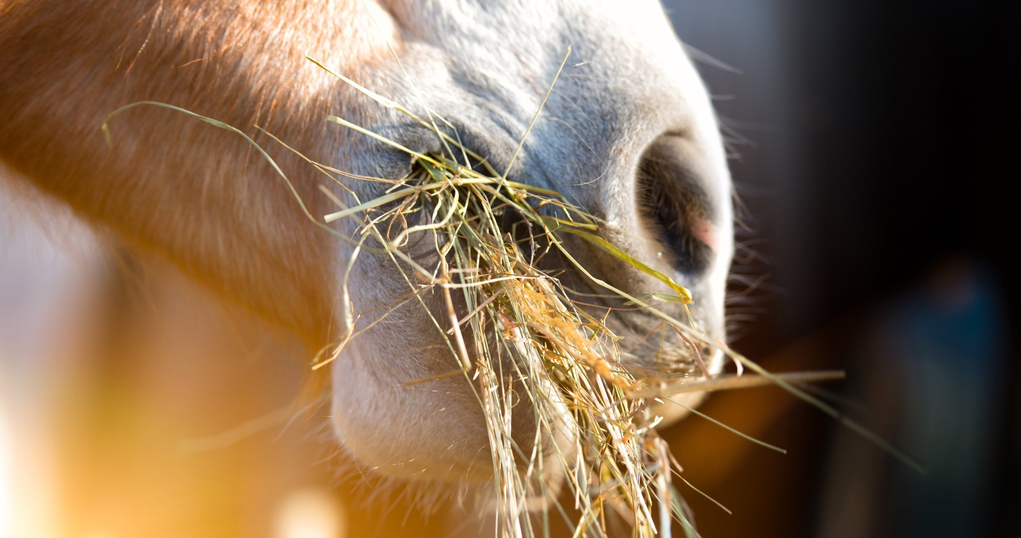 Mmmm! The sweet smell of steamed hay!