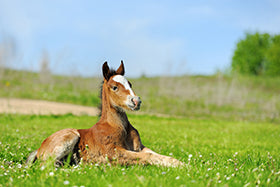 Some long-term impacts of foal management