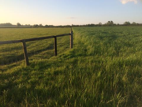 Understanding and managing summer grazing and pasture
