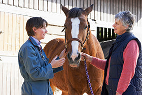 Equine Ulcers Behaviour