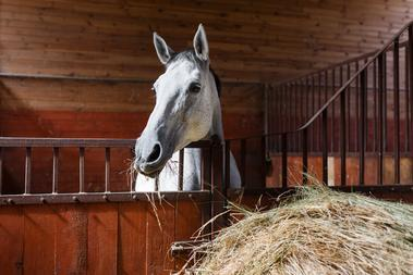 Keeping stabled horses happy and healthy- by Sharon Smith MSc (award-winning Entrepreneur Scientist in the Equine Sector)