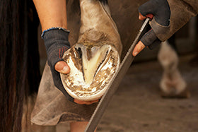 Laminitis in Horses: What Every Horse Owner Needs to Know, Part Two