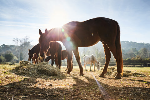 The importance of the horses respiratory system in health and performance, by Dr David Marlin - part 2
