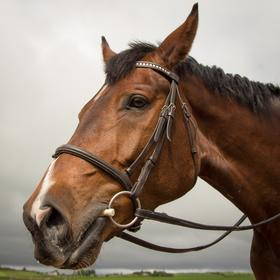 Understanding and Recognising Fatigue in Horses