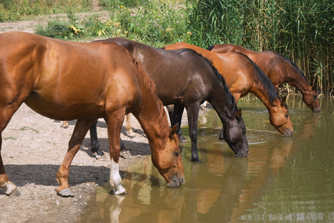 Ask the Vet, Part 2: How to keep your horse hydrated during the winter