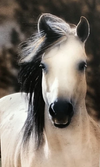 Susan Williams Emmet Horse Photograph on Canvas - Cowgirl Kim