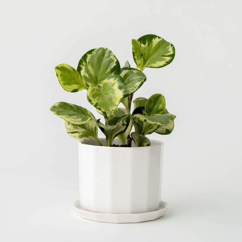 Riveted Planter | 5"