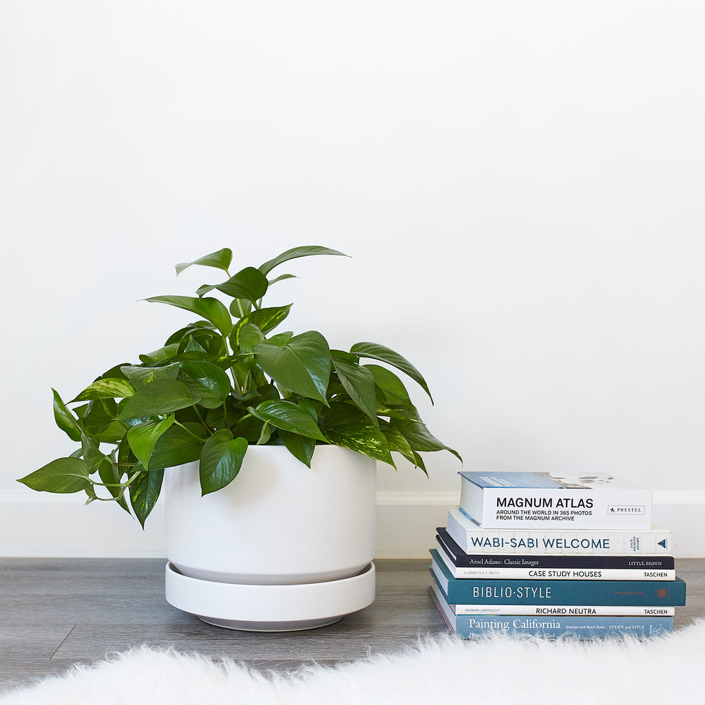 Round Two 10 Inch Planter - Apt. F x REVIVAL Ceramics by LBE Design