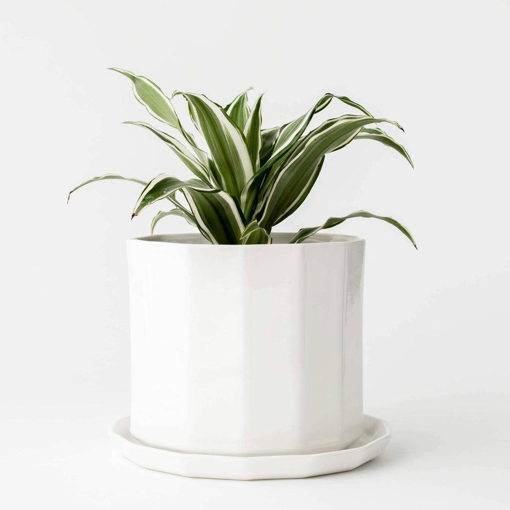 Riveted Planter | 8"