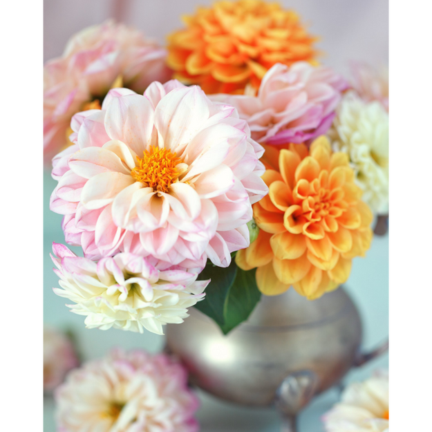 Darling Dahlia Paint by Number Kit