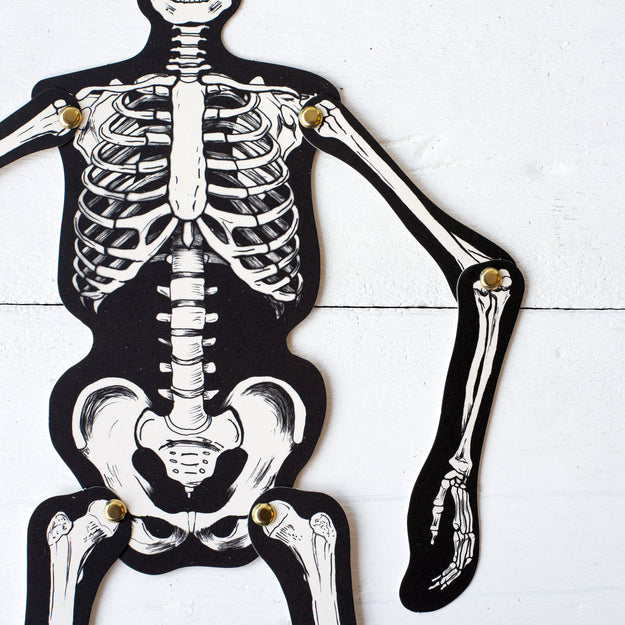Articulated Skeleton Decorative Accent – Hester & Cook