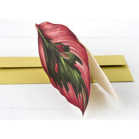 Die-Cut Pink Cordyline Leaf