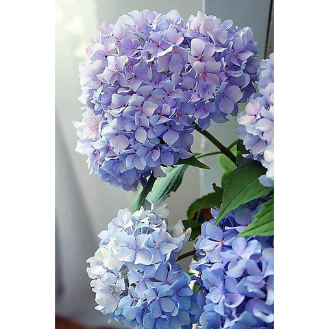Happily Hydrangea Paint by Numbers Kit