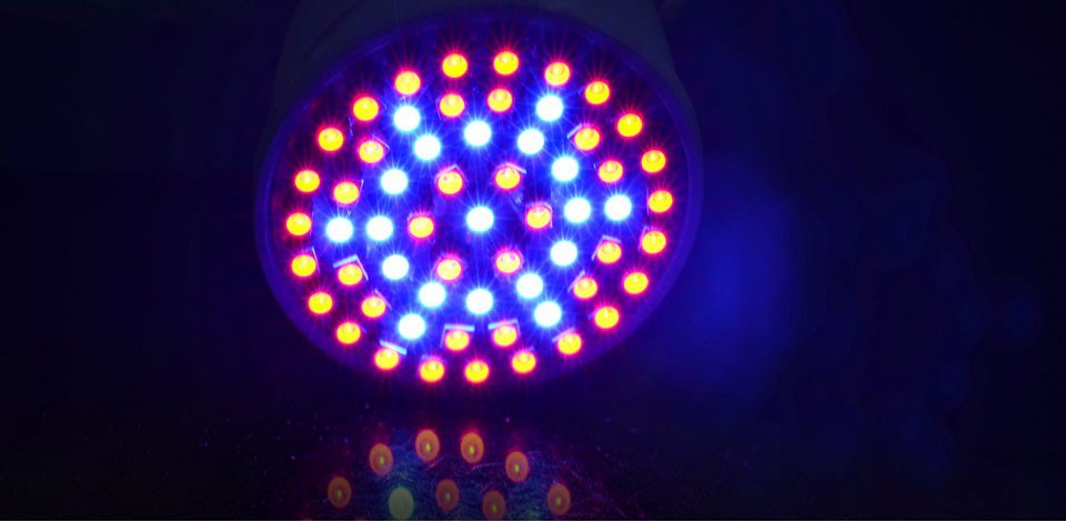 Full Spectrum Blue Led Lamps For Flowering Plant and Hydroponics