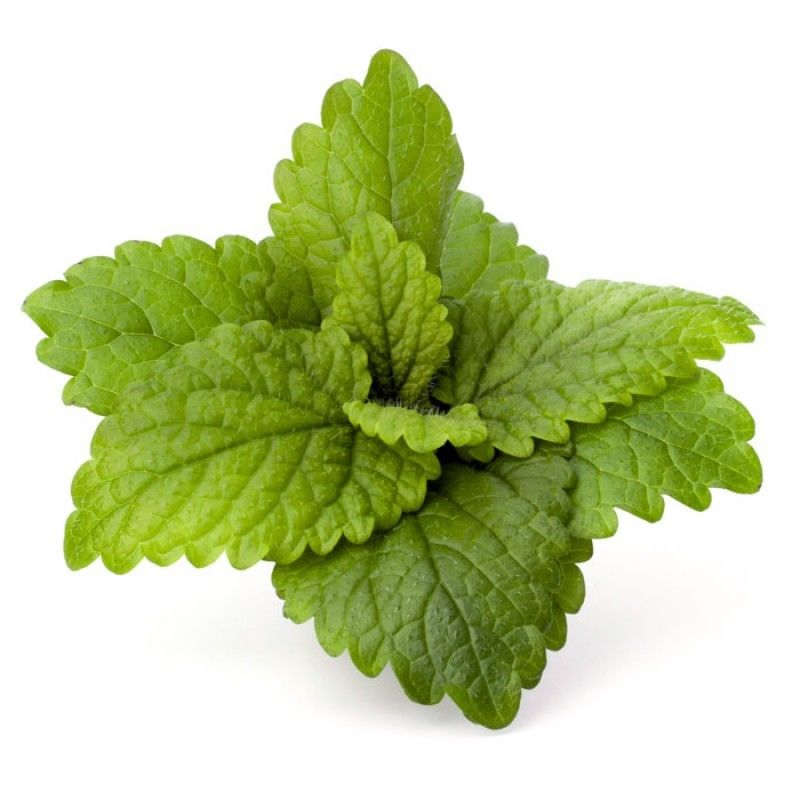 Peppermint Essential Oil 100% Pure Natural PREMIUM Therapeutic Grade Oils 15ml Free Shipping