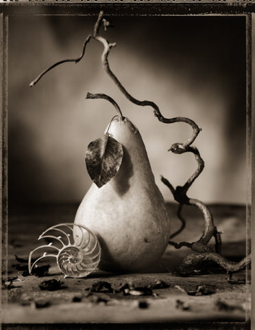Pear and Shell Photography Rosanne Olson- Portfolio2 Gallery