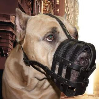 Harnesses & Muzzles