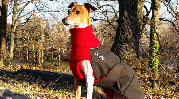 Winter Dog Coat--Great White North--Red/Blk