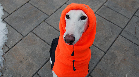 Dog Hat / Head Muff - Orange