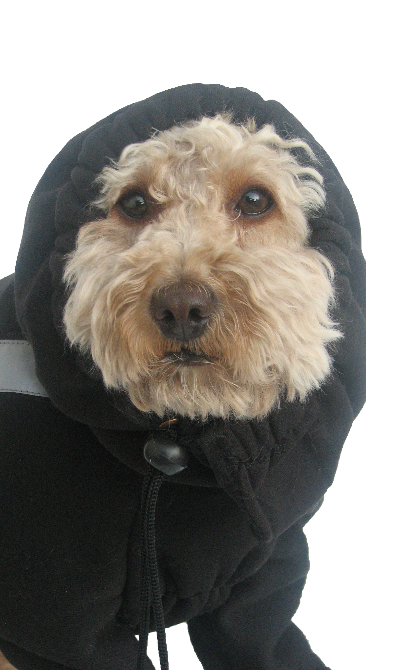 Fleece Dog Hood
