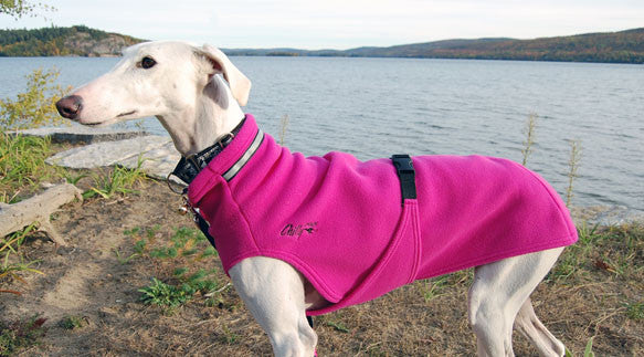 Dog Sweater for Long & Lean Dogs - Raspberry