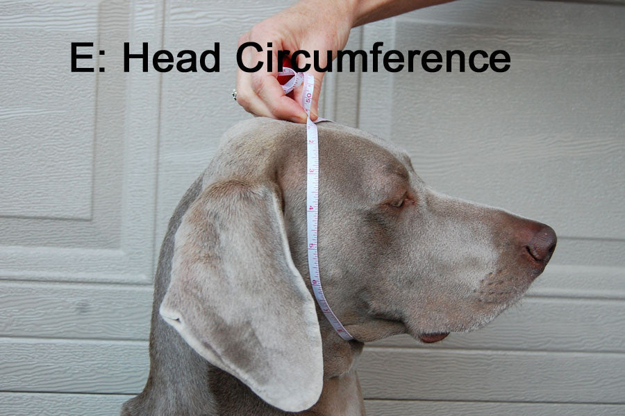 Dog Hat / Head Muff - Head Circumference