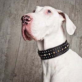 AWARD WINNING COLLECTION OF HAND CRAFTED COLLARS