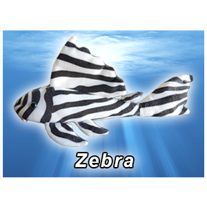 Zebra Pleco Plush! - KGTropicals