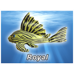 Royal Pleco Plush! - KGTropicals