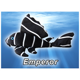 Emperor Pleco Plush! - KGTropicals