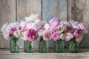 Gods Garden Treasures Love Peonies Flower Delivery Blog
