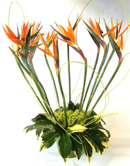 Love In Paradise... Dramatic Birds of Paradise for #ValentinesDay