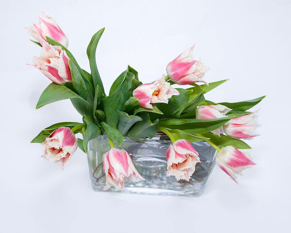 Tulip Temptation - God's Garden Treasures