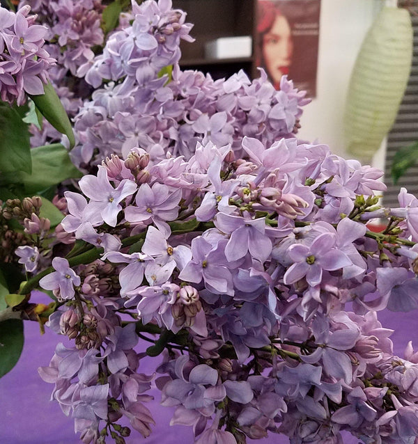 Lucious Lilacs