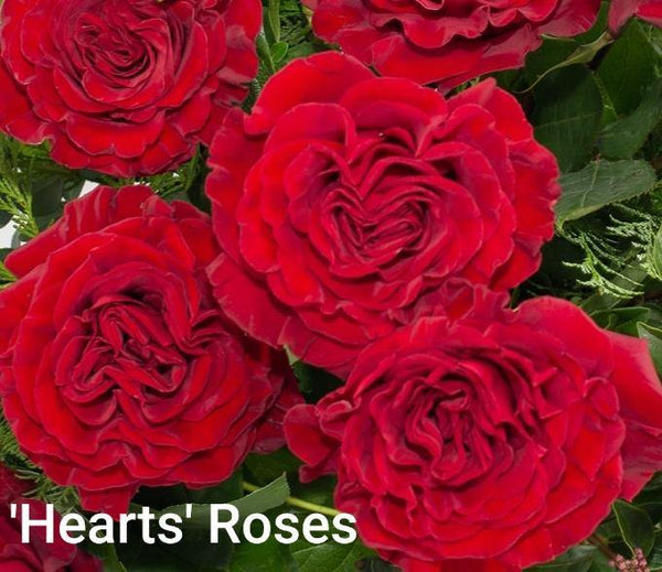 'Hearts' Roses - One Dozen
