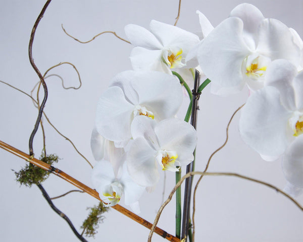 Opulent Orchids - God's Garden Treasures