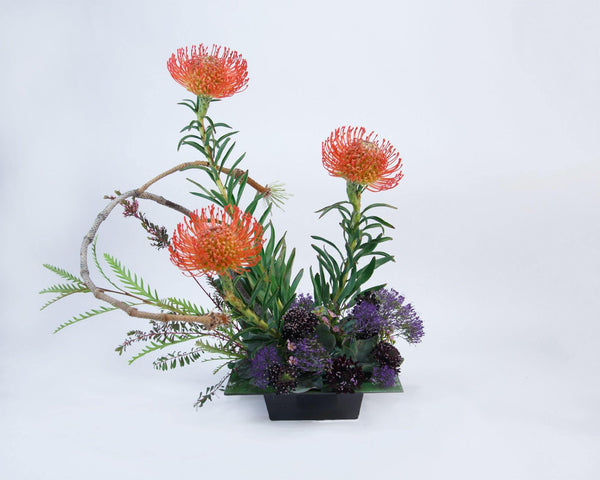 Protea Paradise - God's Garden Treasures