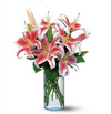 Lovely Lillies - God's Garden Treasures