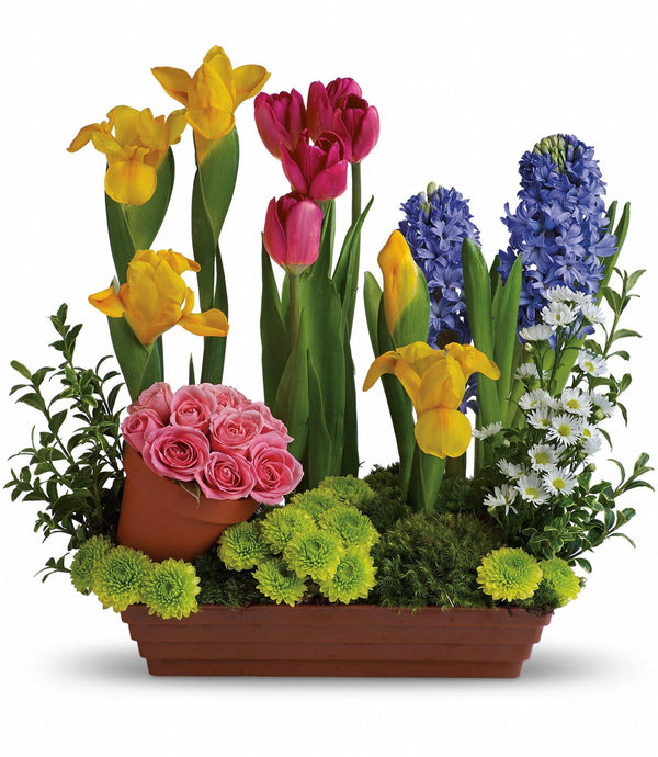 Spring's Favorite Flowers - God's Garden Treasures