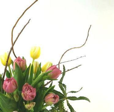Spring Specialty Tulips