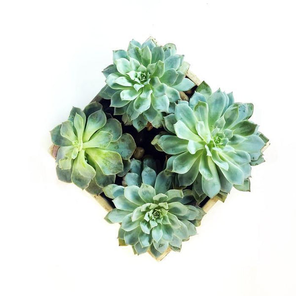 Succulent Garden - God's Garden Treasures
