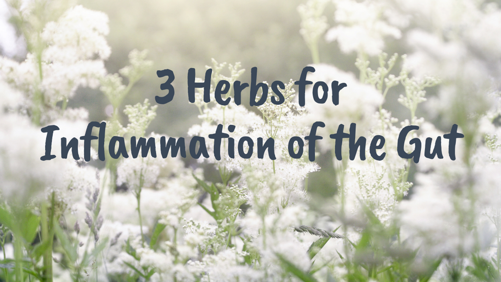 3 Herbs for Inflammation of The Gut