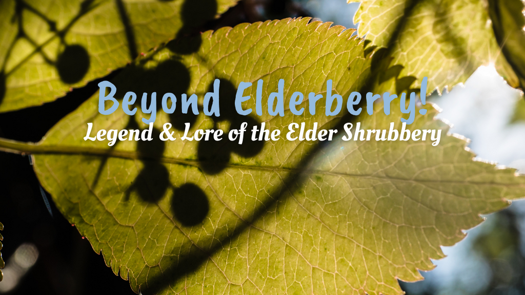 Beyond Elderberry! Legend and Lore of the Elder Shrubbery