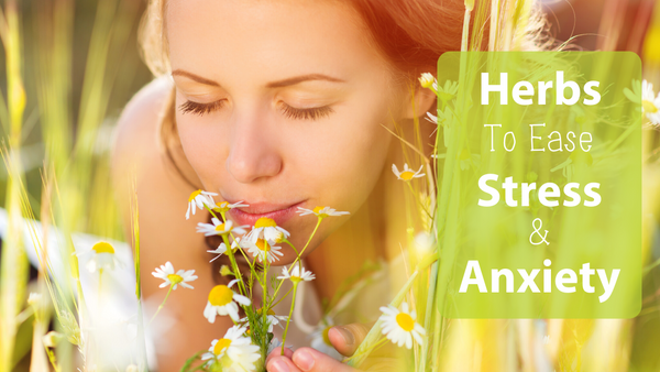 Herbs To Ease Stress & Anxiety