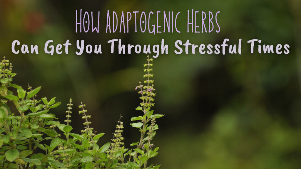 How Adaptogenic Herbs Can Get You through Stressful Times