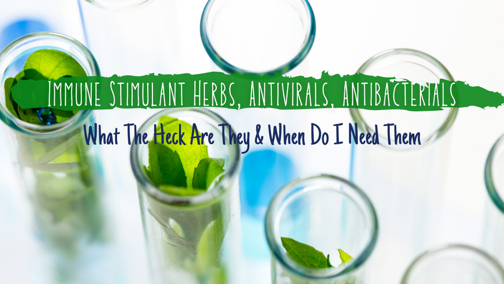 Immune Stimulant Herbs, Antivirals, Antibacterials: What The Heck Are They & When Do I Need Them