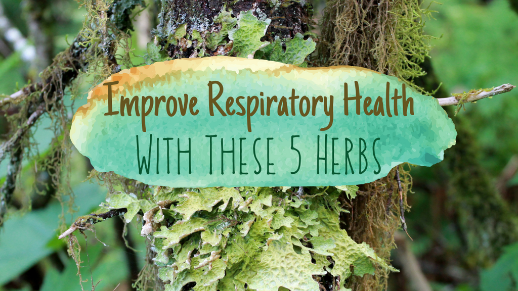 Improve Respiratory Health with These 5 Herbs