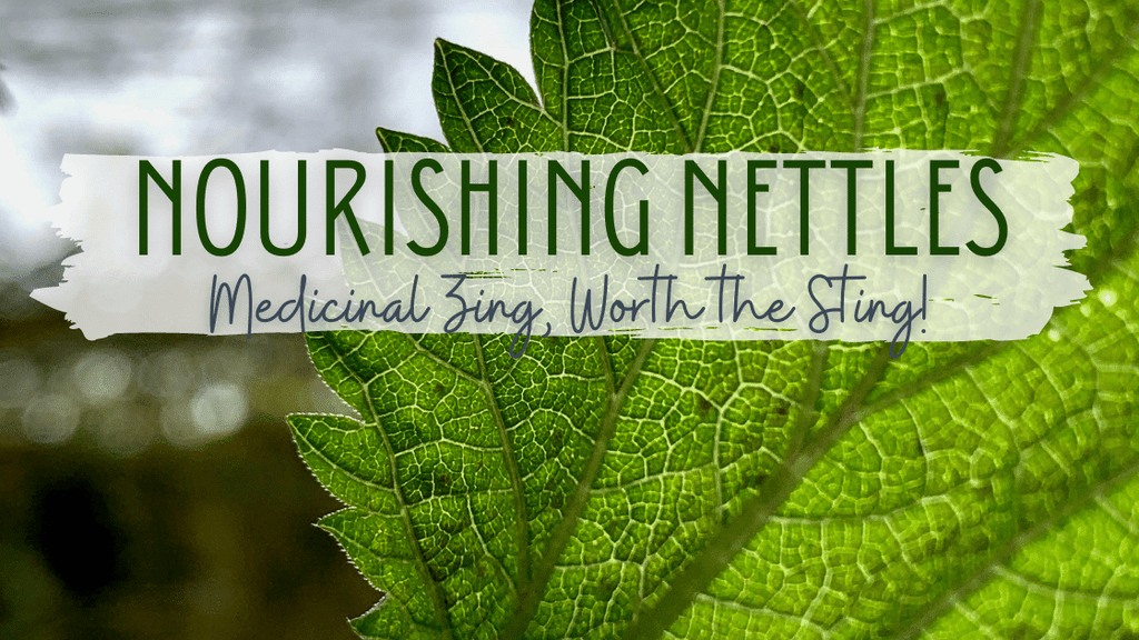 Nourishing Nettles: Medicinal Zing, Worth the Sting!